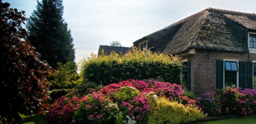 Podstawowa pielęgnacja nawiosnę, tobujny ogród latem