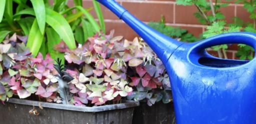 Jaka woda jest najlepsza dopodlewania roślin doniczkowych?