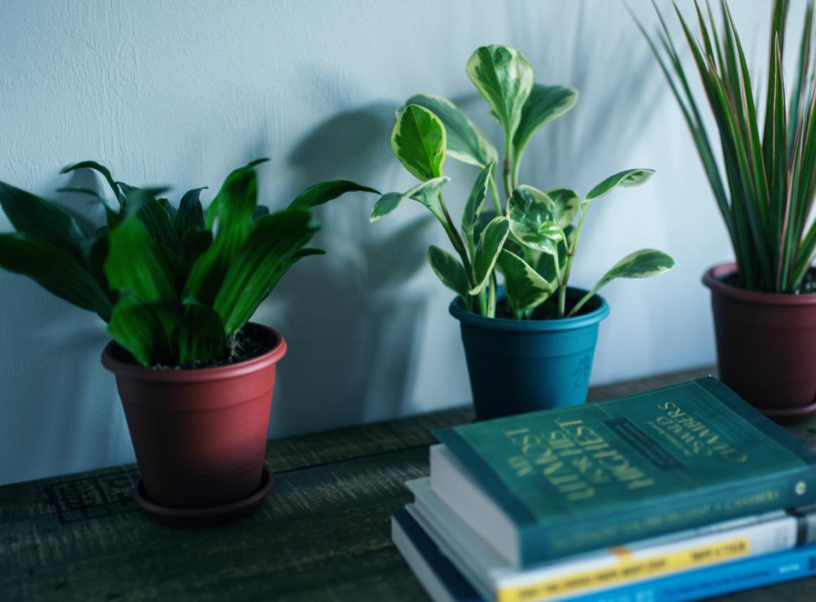 Kwiaty dla każdego – niewymagające rośliny doniczkowe