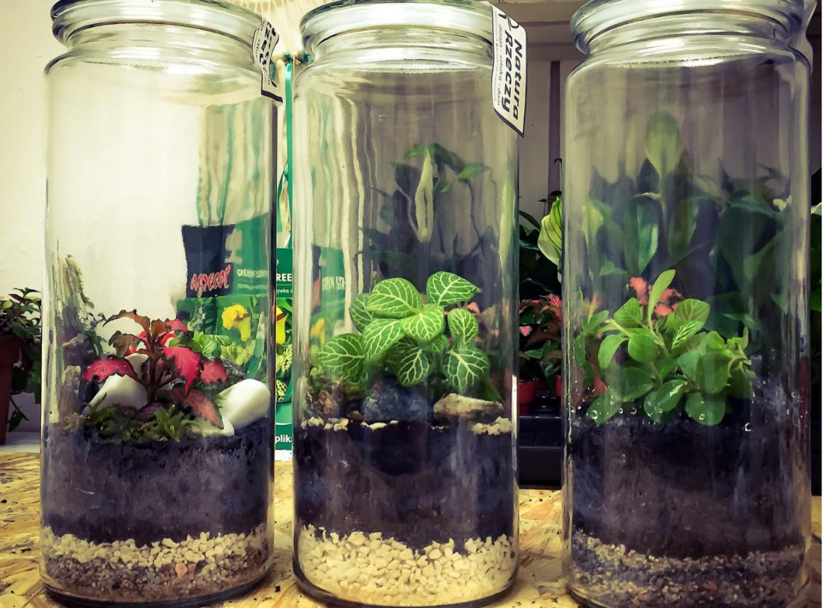 Las wszkle – rośliny wnowoczesnym wydaniu