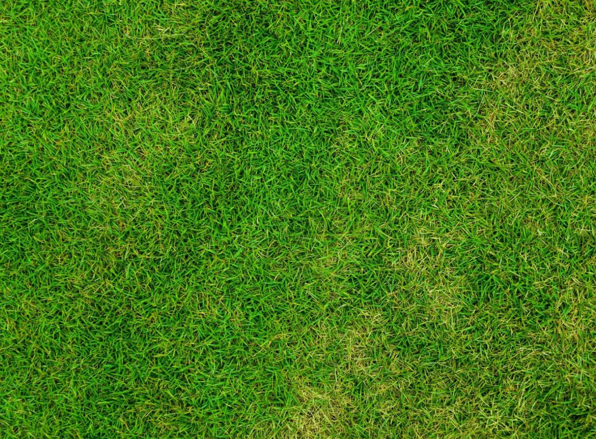 Jak rozłożyć trawę zrolki?