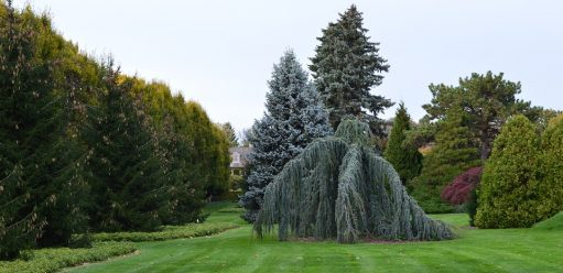 Drzewa ozdobne doogrodu – jakie wybrać