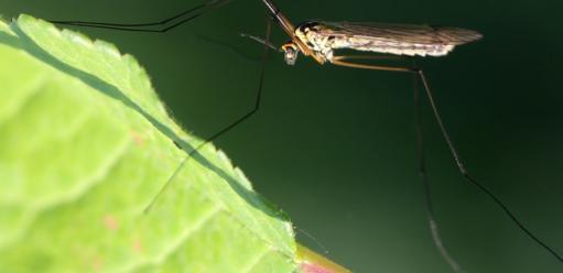 Jak pozbyć się komarów wogrodzie – nasze sposoby