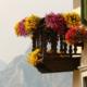 Roślinność balkonowa- jakie rośliny hodować nabalkonie?