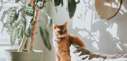 Zwierzęta wdomu – jak zaaranżować wnętrze, wktórymmieszka kot?