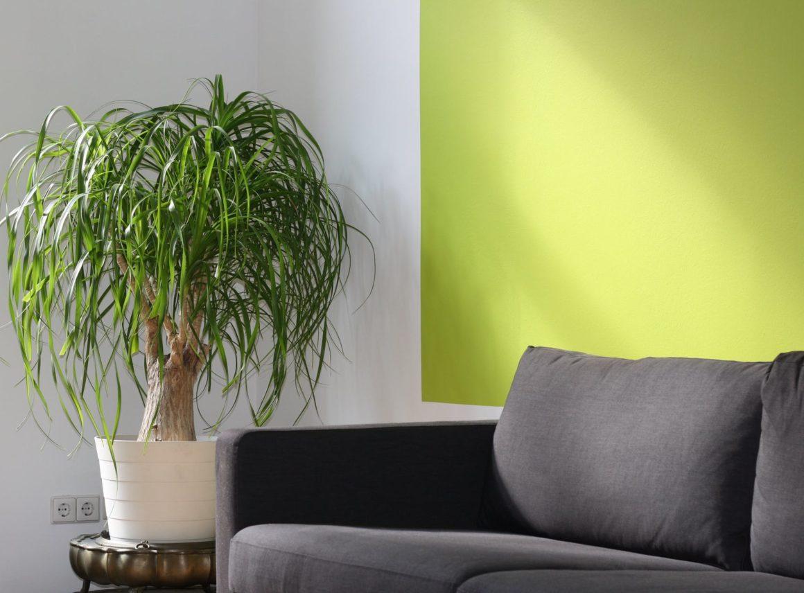 Jak dobrać odpowiedni kolor sofy dościan wsalonie?
