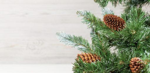 Najpopularniejsze rodzaje igatunki żywych isztucznych choinek – sprawdź, jakie drzewko kupić naświęta!