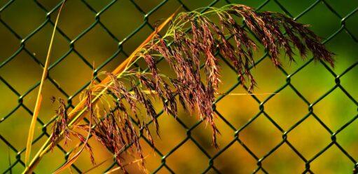 Jak tanio ogrodzić dom? Wykorzystaj siatki ogrodzeniowe