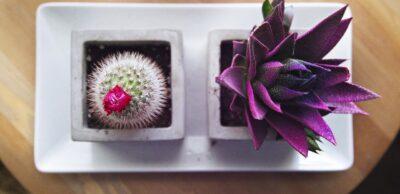 Jak pielęgnować rośliny doniczkowe? Najpopularniejsze choroby iszkodniki roślin