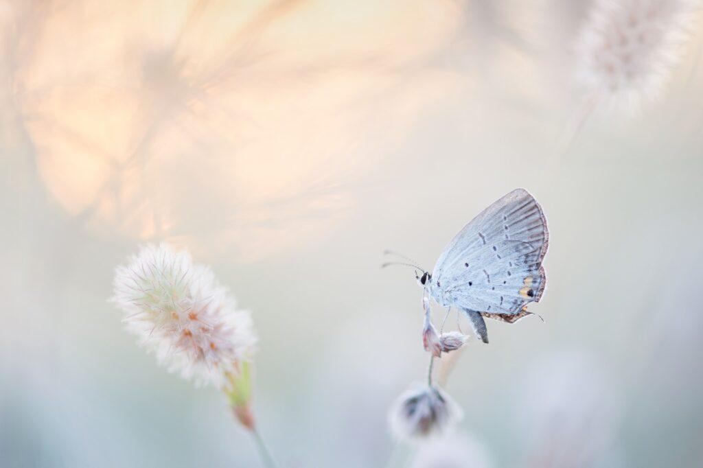 raj dla motyli - jakie kwiaty posadzić nabalkonie, byje przyciągnąć?