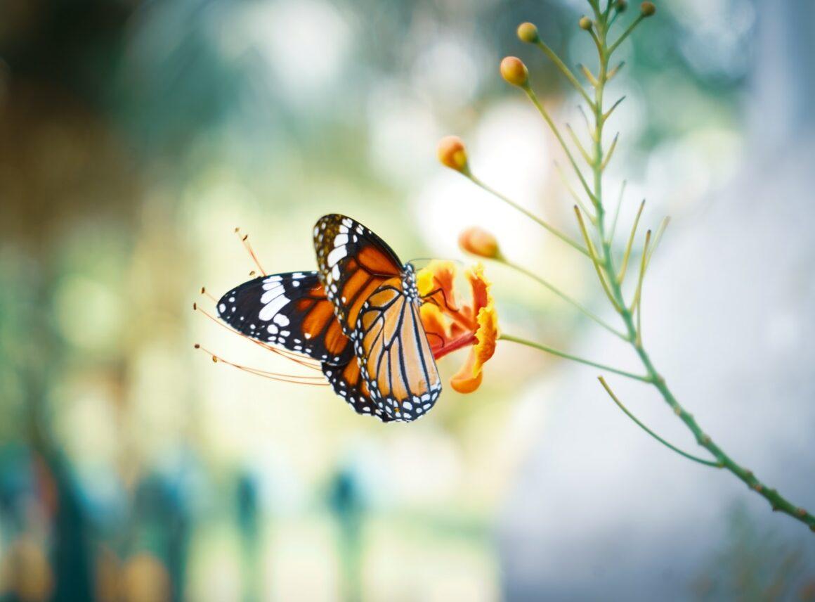 Raj dla motyli, czyli jakie kwiaty posadzić nabalkonie iwogrodzie, aby przyciągnąć motyle?