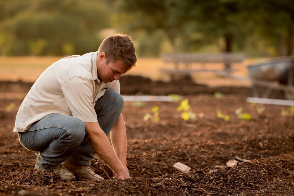 nasiona-marcowe-prace-w-ogrodzie