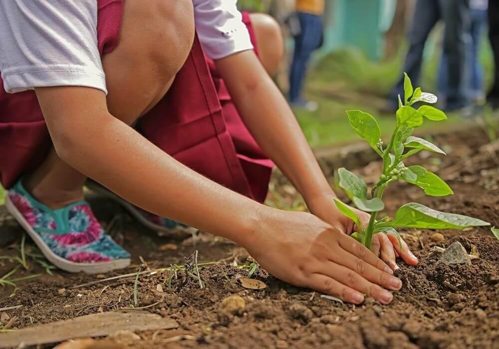 Oczym pamiętać podczas pielęgnacji ogrodu?
