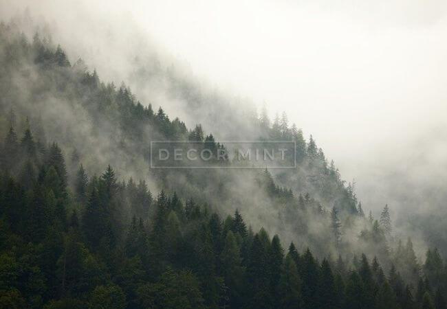 Fototapety naścianę - zamglony las